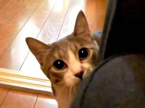 NOGIBINGOの乃木猫動画選手権を見た感想。アンタ柴田がゲスト出演